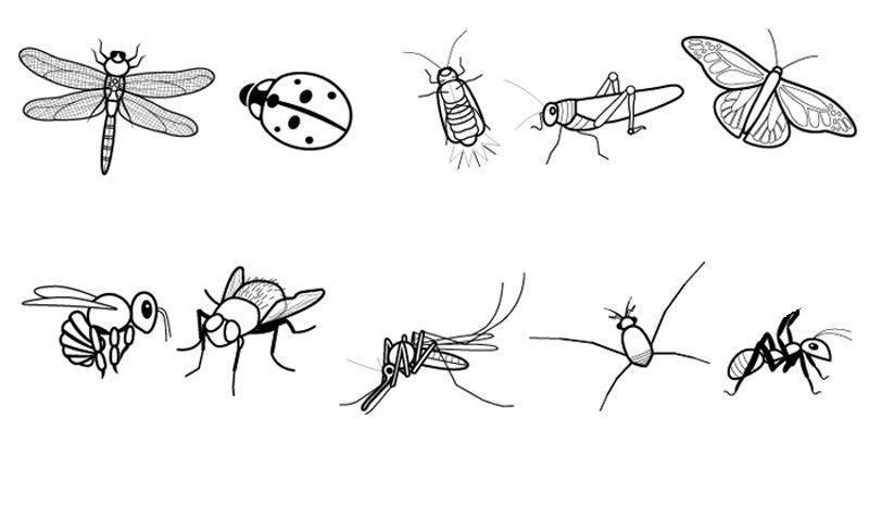 Hermosa Páginas Para Colorear Insectos Para Niños Ornamento ...