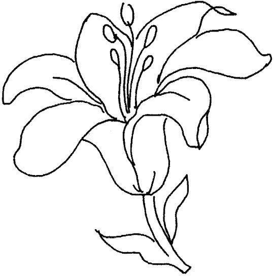 Pintar Flores Lirios
